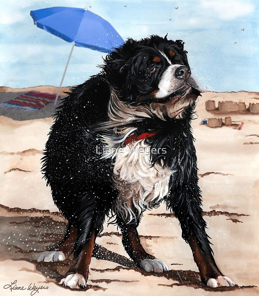 Bernese Mountain Dog by Liane Weyers