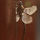 Dragonfly by Tamara Brandy