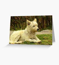 White Shaggy Dog Greeting Card