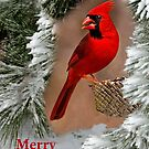 Merry Christmas by Janice Carter