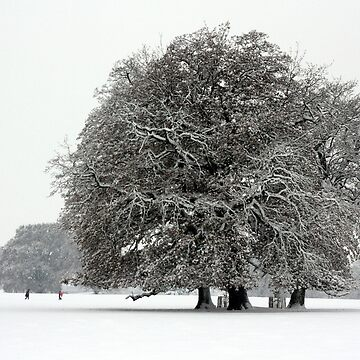Winter in Petworth Park by stunnerfield