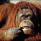 Orangutan by Garry Gay