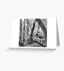 Dipsea Trail, Muir Woods National Monument Greeting Card