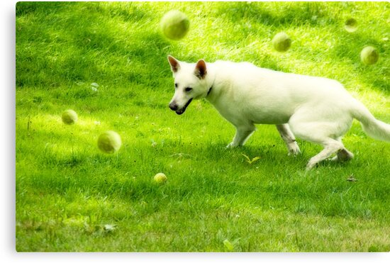 Tennis Ball Dreams by Pamela Shane