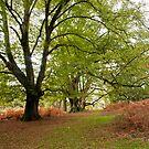 The start of Autumn by LorrieBee