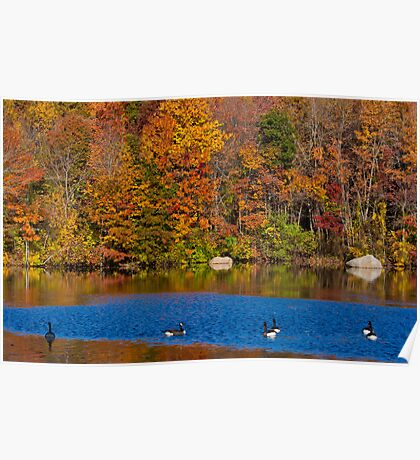Natures Colorful Autumn  Poster