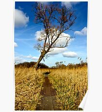 Tree in the reed beds  Poster