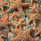 Starfish in net by Garry Gay