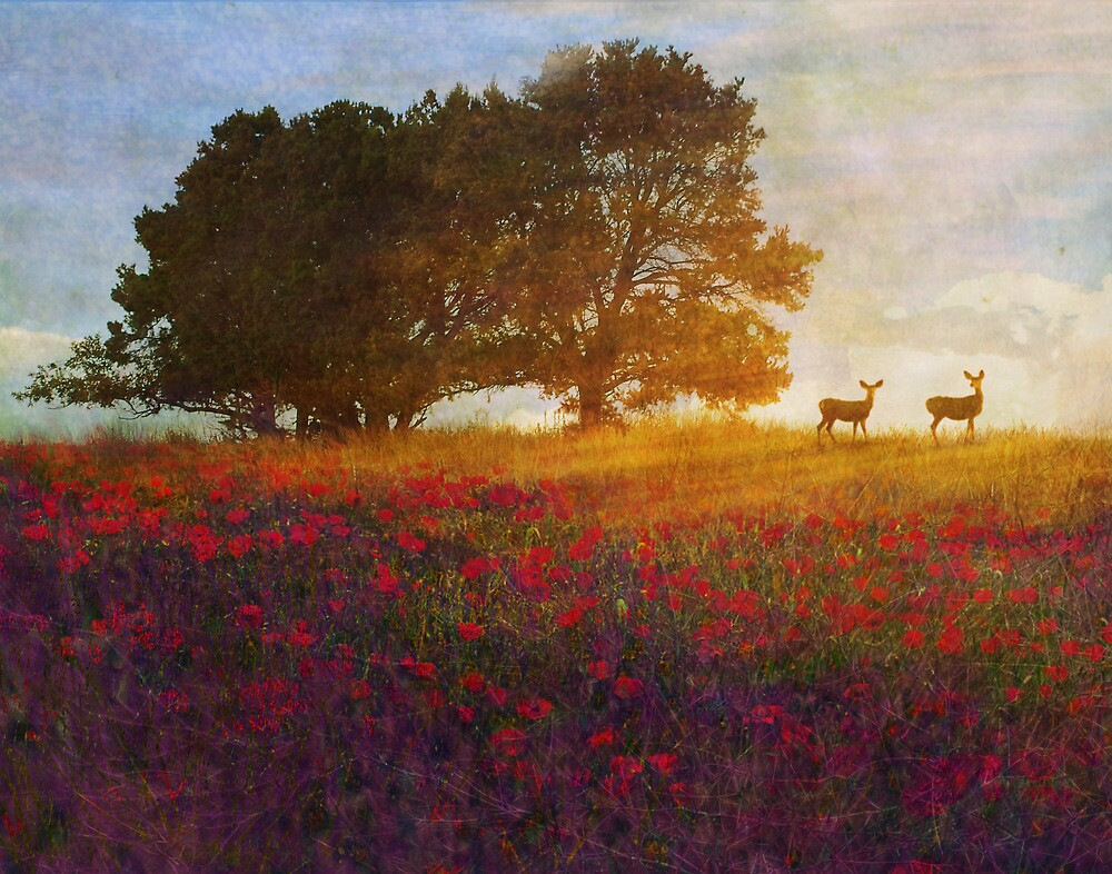 sunset with poppies and deer by R Christopher  Vest