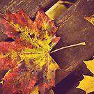 Resting  leaves by Julia Goss