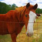 Horse Love ♥ by Debbie Robbins