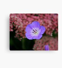 Wild Blue Flax Canvas Print