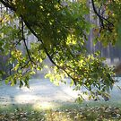 @@@  Like a Killer Shot  @@@ . October morning lights and wonders . made by Brown Sugar. Views (131) favorited by (5) thank you ! Views (20) favorited by (3) so good ! Wow !!! by © Andrzej Goszcz,M.D. Ph.D