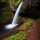 Ponytail Falls II by Tula Top