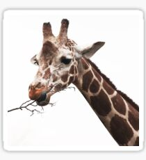 hungry giraffe Sticker