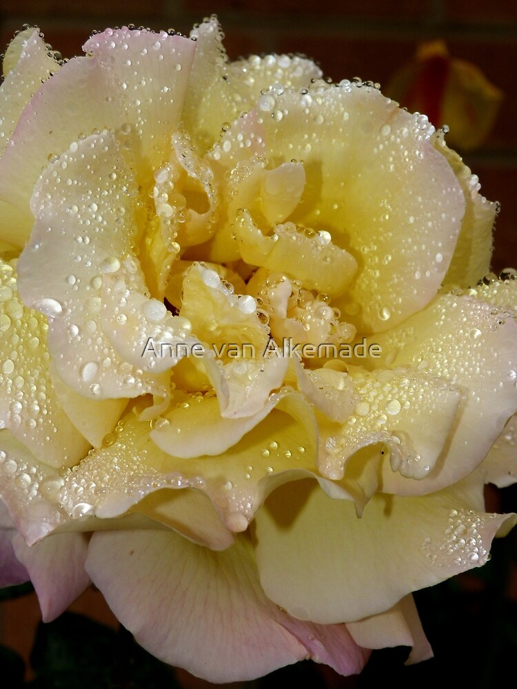 Peace after the rain by Anne van Alkemade