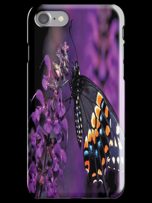 Eastern Black Butterfly by purplesensation