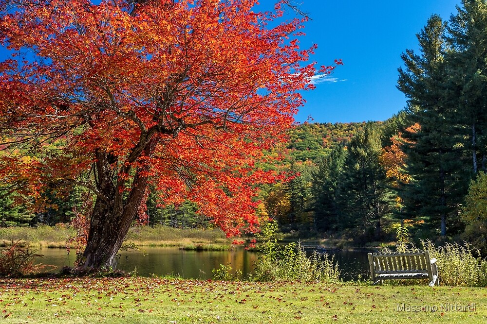The Tree and the Bench in Gorgeous Fall Colors by Massimo Nittardi