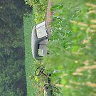Truck in Corn Field by Donald Salsbury