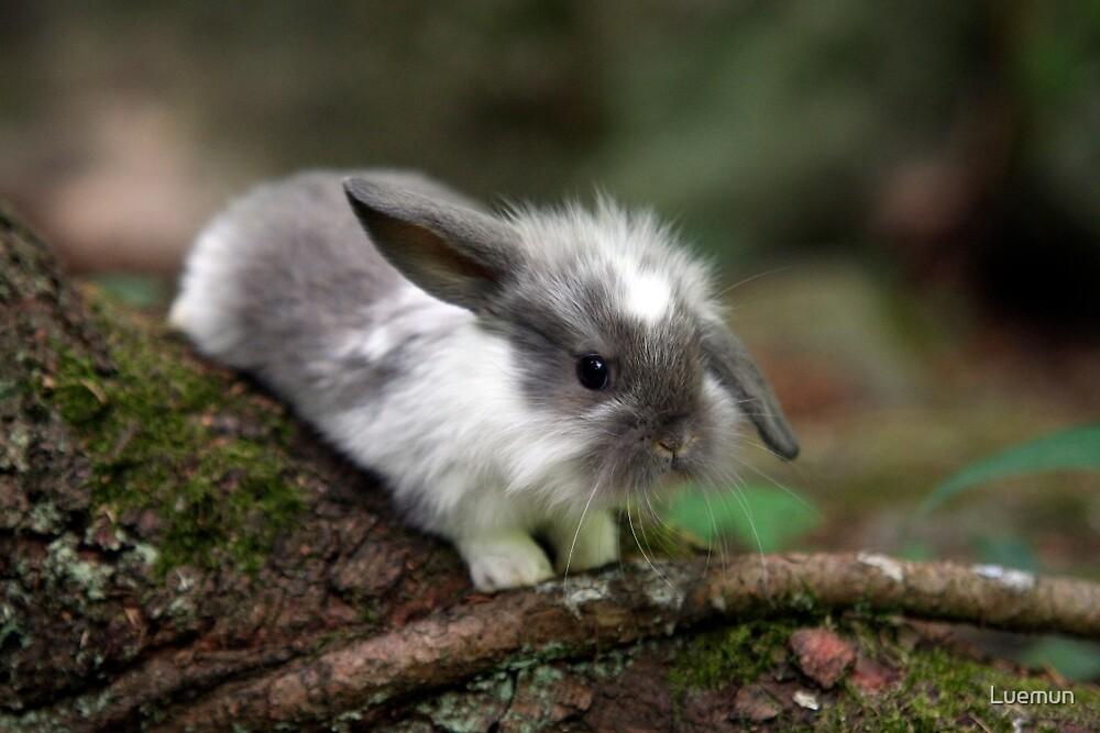 Cute lop ear baby bunny by Luemun