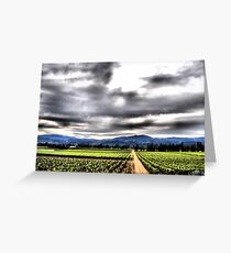 Napa Valley Vineyard Greeting Card