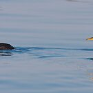 Two Red-necked Grebes by DigitallyStill