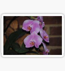 Flower Beauty – 20 Sticker