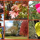 Colors of Fall by debbiedoda