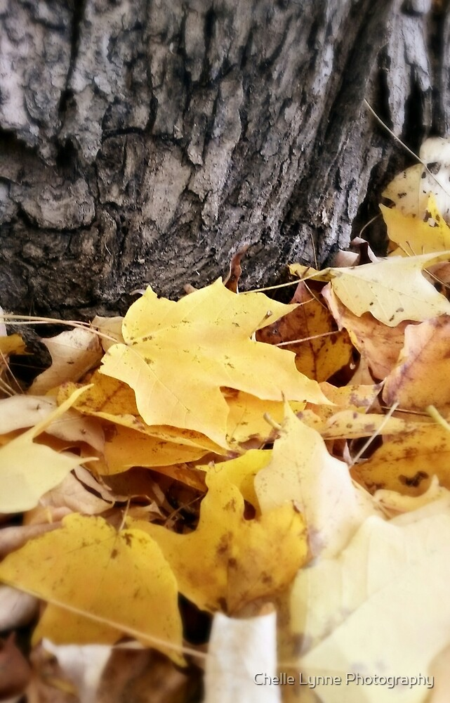 Fall's Blanket by Chelle Lynne Photography