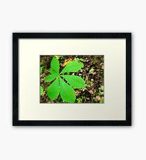 A Fallen Leaf Framed Print