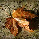 fallen ... by dinghysailor1