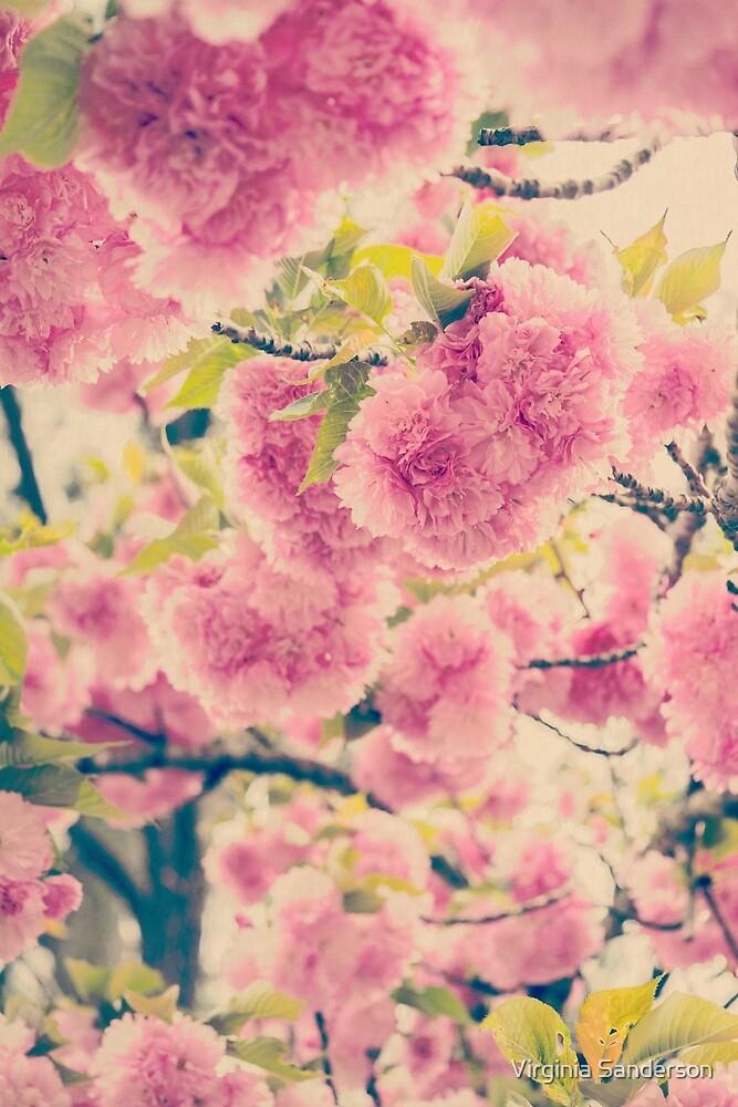 Dreamy Pink Pompom Blossoms of Yaezakura Cherry by Virginia Sanderson