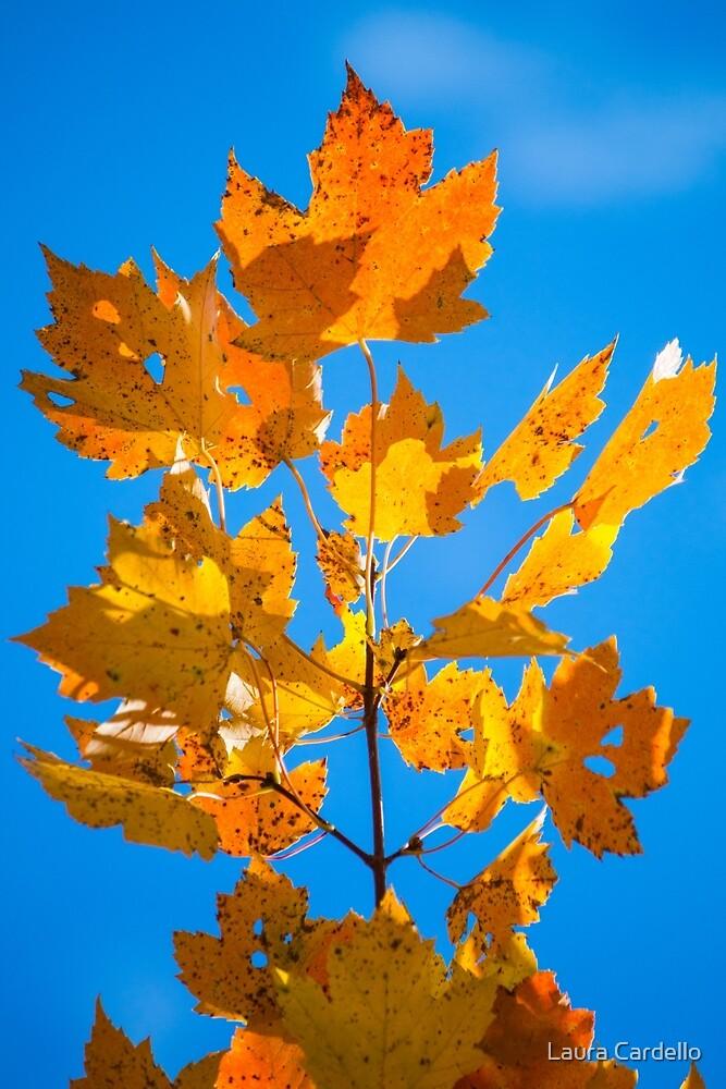 Autumn Maple by Laura Cardello