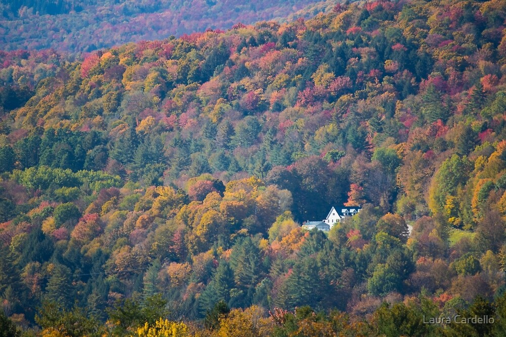 Colors of Autumn by Laura Cardello