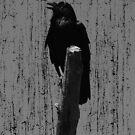 THE BIRDS by Luke Stephensen
