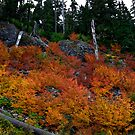 Give Me Your All by Charles & Patricia   Harkins ~ Picture Oregon