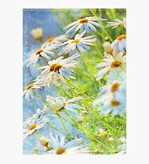 daisy delight Photographic Print