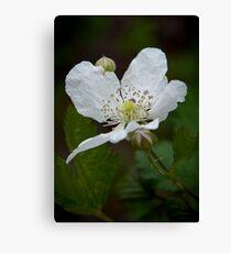 """Wild Blackberry Bloom"" Canvas Print"
