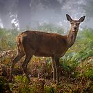 Portrait of a Red Deer Hind by Martin Griffett