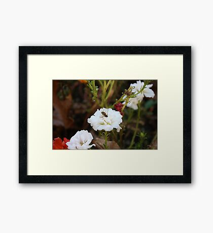 That Busy Bee! Framed Print