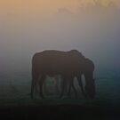The Six-Legged Horse by Yhun Suarez