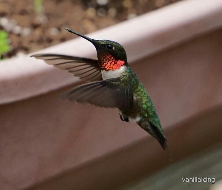 spring hummingbird by vanillaicing
