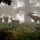 Herding the Harem by Martin Griffett