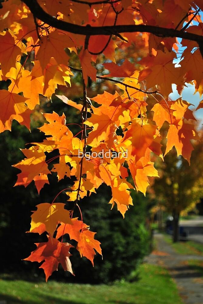 Autumn Sunshine by bgoddard