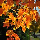 Autumn Sunshine by bgoddard