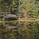Reflections of Autumn by Sally Kady