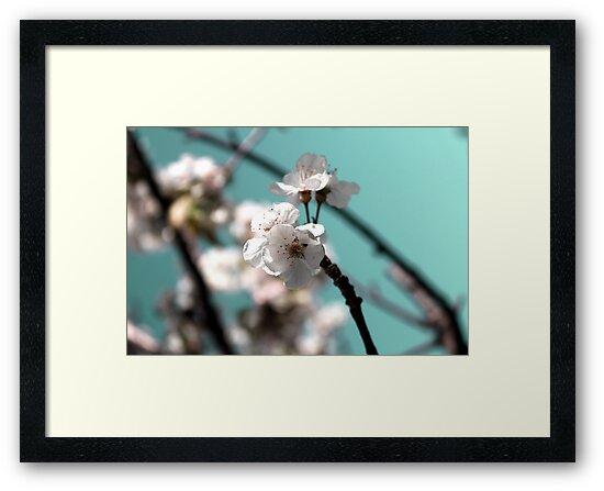 Bloom by Silversalts