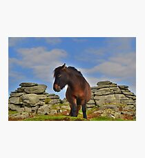 Dartmoor: 'This is my Best Side' Photographic Print