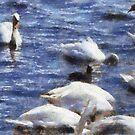 Swans, Abbotsbury, Dorset, UK by David Carton
