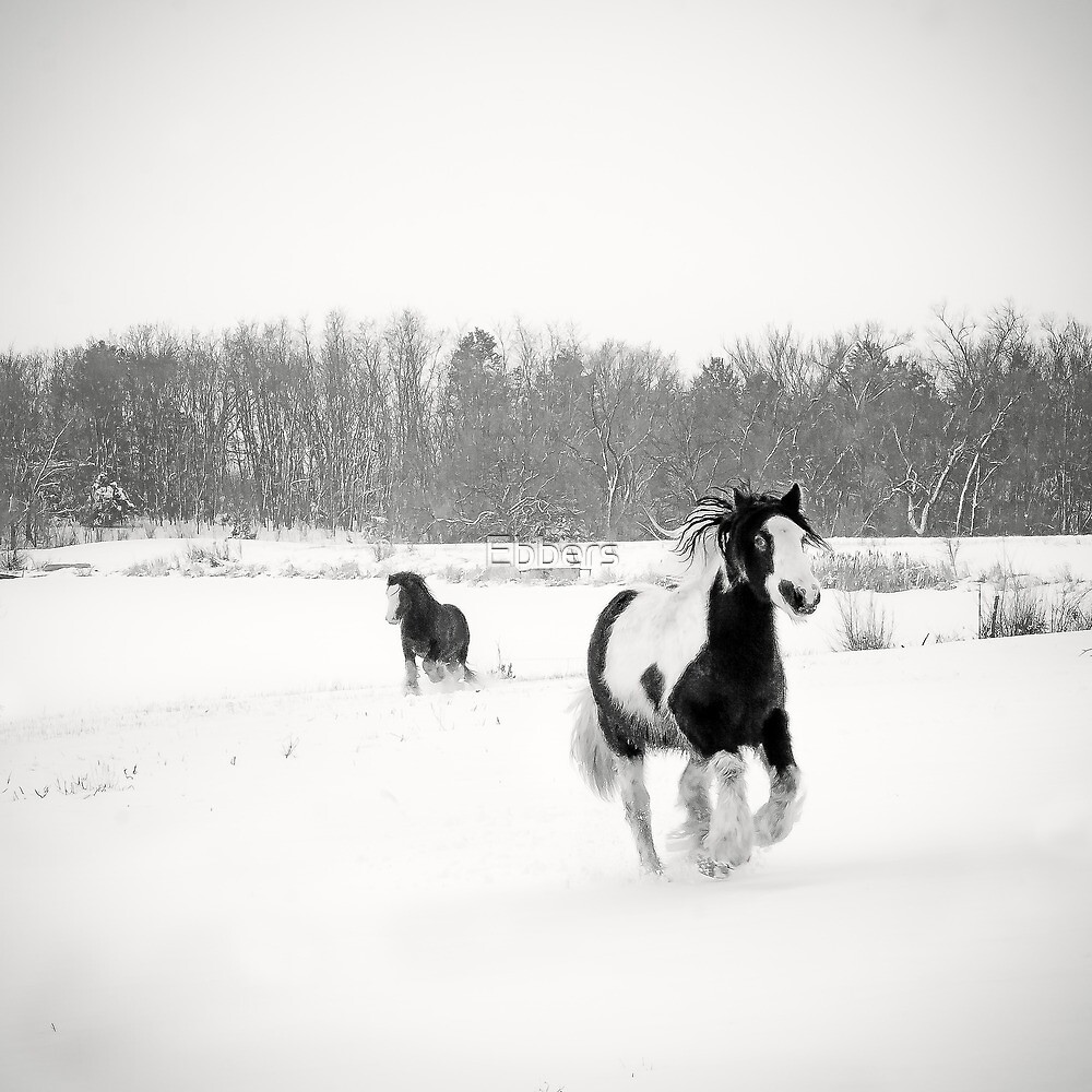 Horse Play by Ebbers